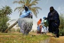 Photo of موريتانيا.. 108 آلاف مزارع يستفيدون من دعم ألماني لإفريقيا