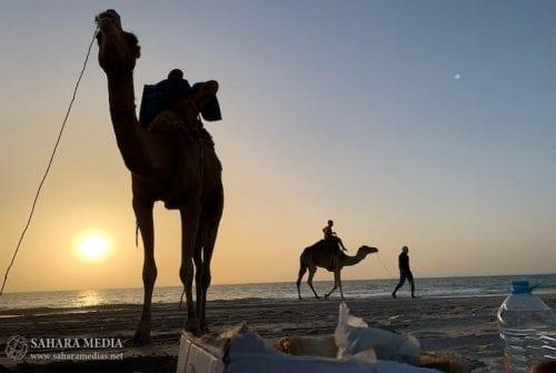الإبل والخيول تحضر بقوة على شواطئ نواكشوط